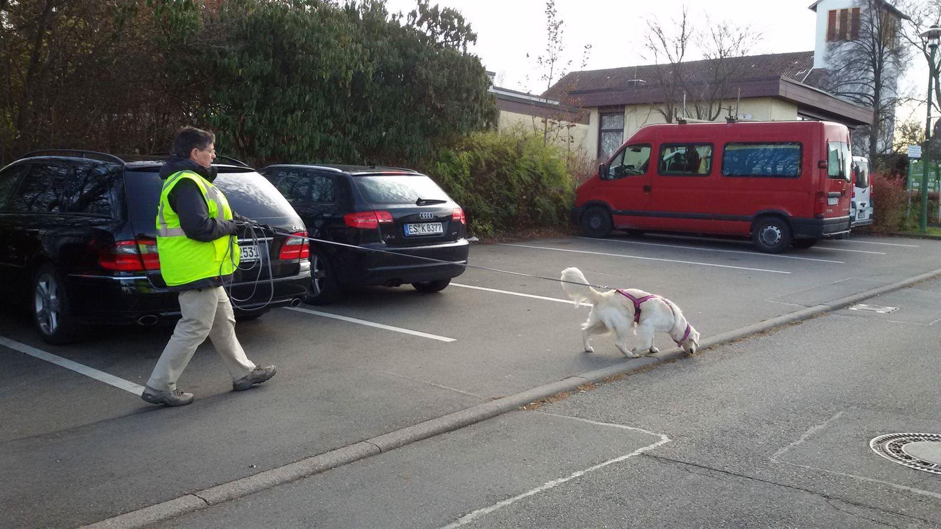 jobs mit hund